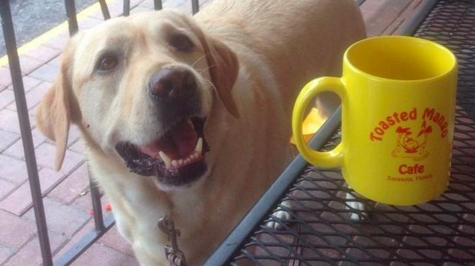 Toasted Mango Cafe's dog-friendly patio
