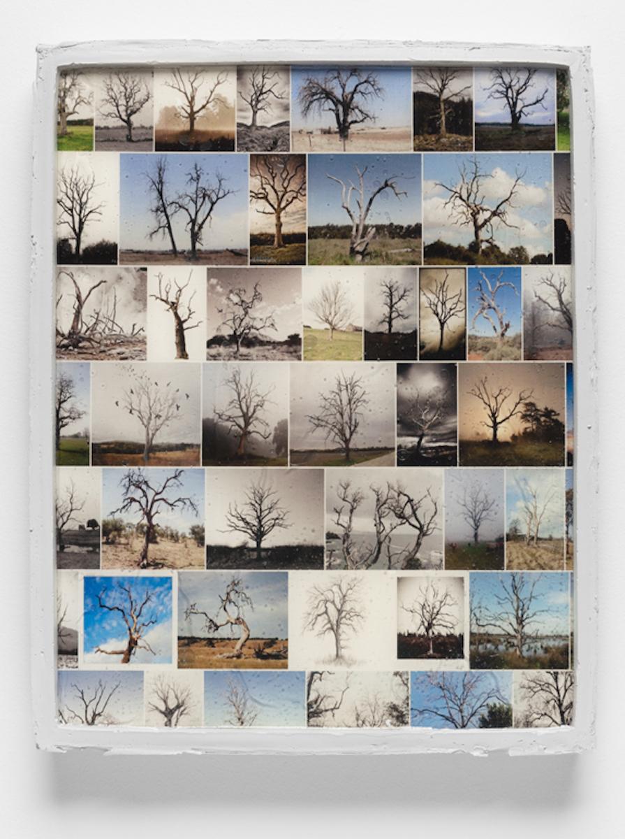 Framed Image (dead trees)