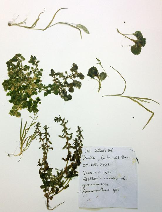 Ten Years Later,  weeds collected by Ulrike Gamper in 2003, Herbarium, Venice, 2013