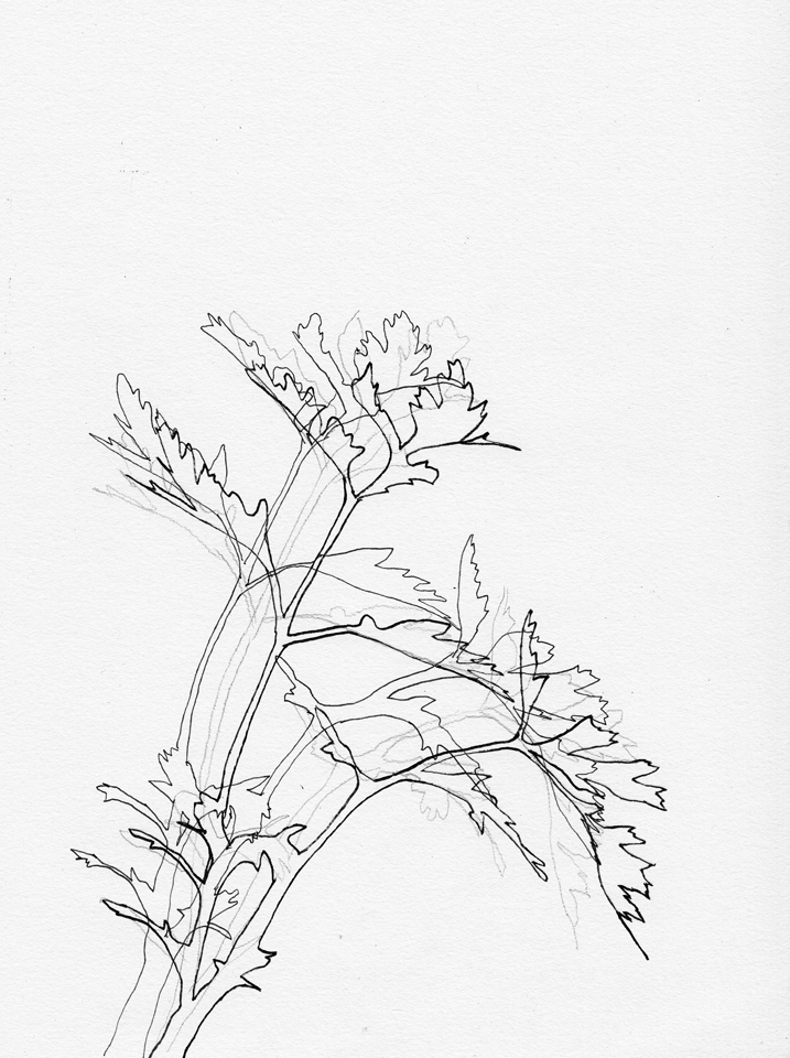 Shadow (Parsley) , August 23: 7.30am & August 24: 7.30am, pencil and ink on paper.