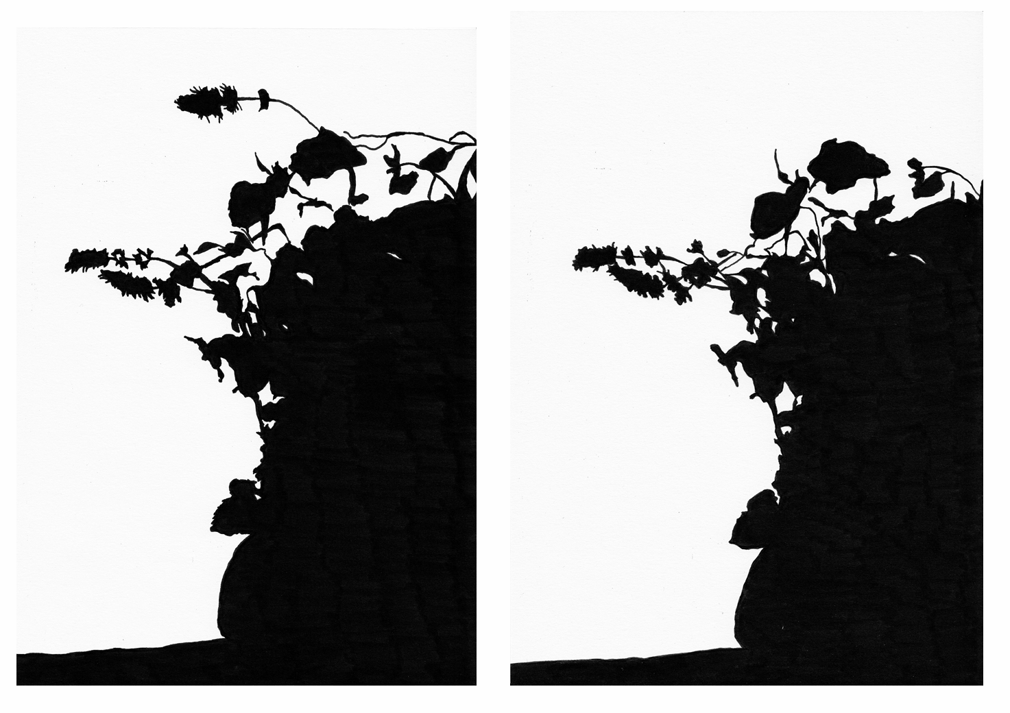 Shadows (Mint) , August 19, left: 7.05am, right: 7.12am, 2012, pencil and charcoal on paper.