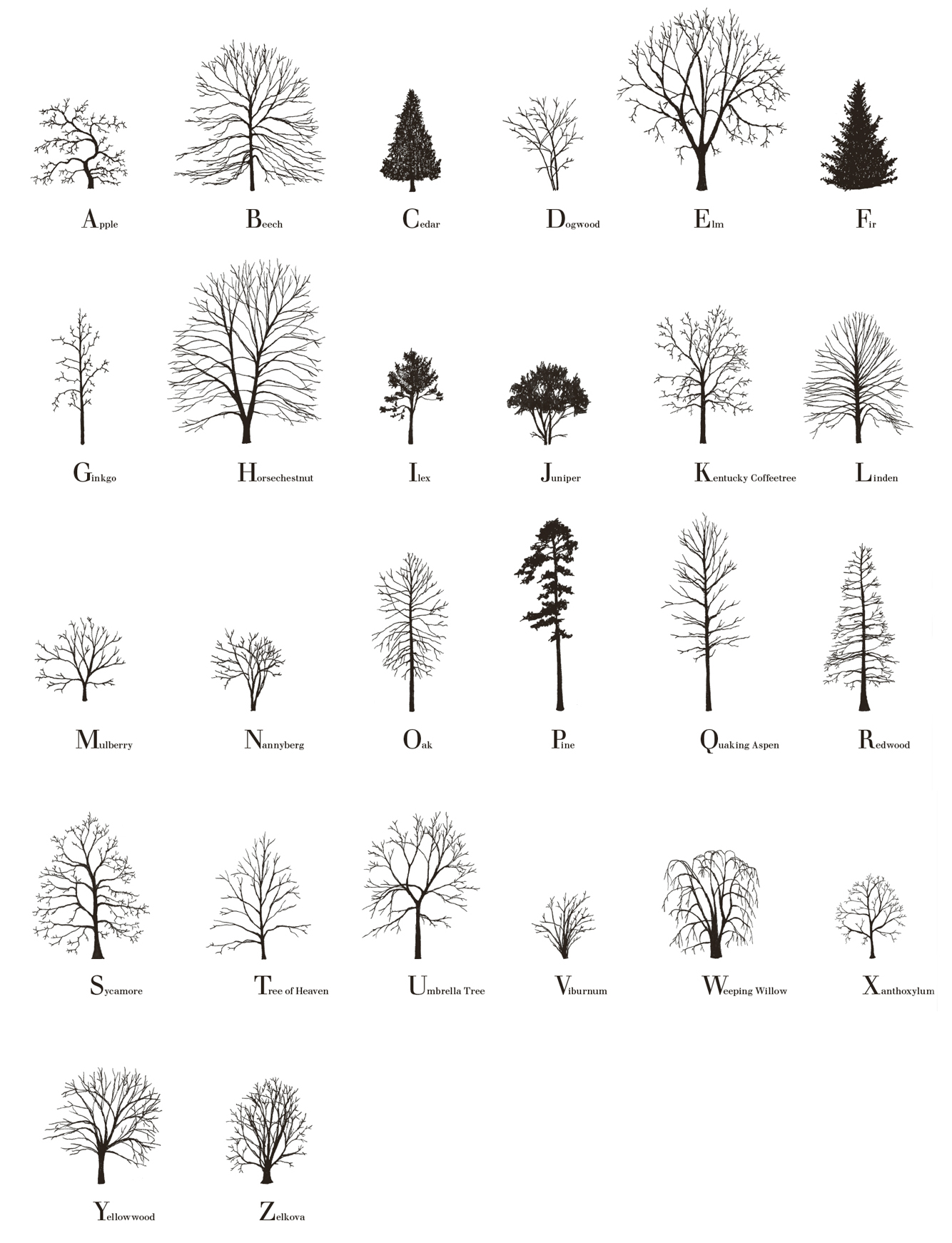 Tree Alphabet, 2015, handmade offset print on paper, 308gm, 50 x 70 cm, edition of 50. Signed, numbered and dated by the artist.  Buy prints here.