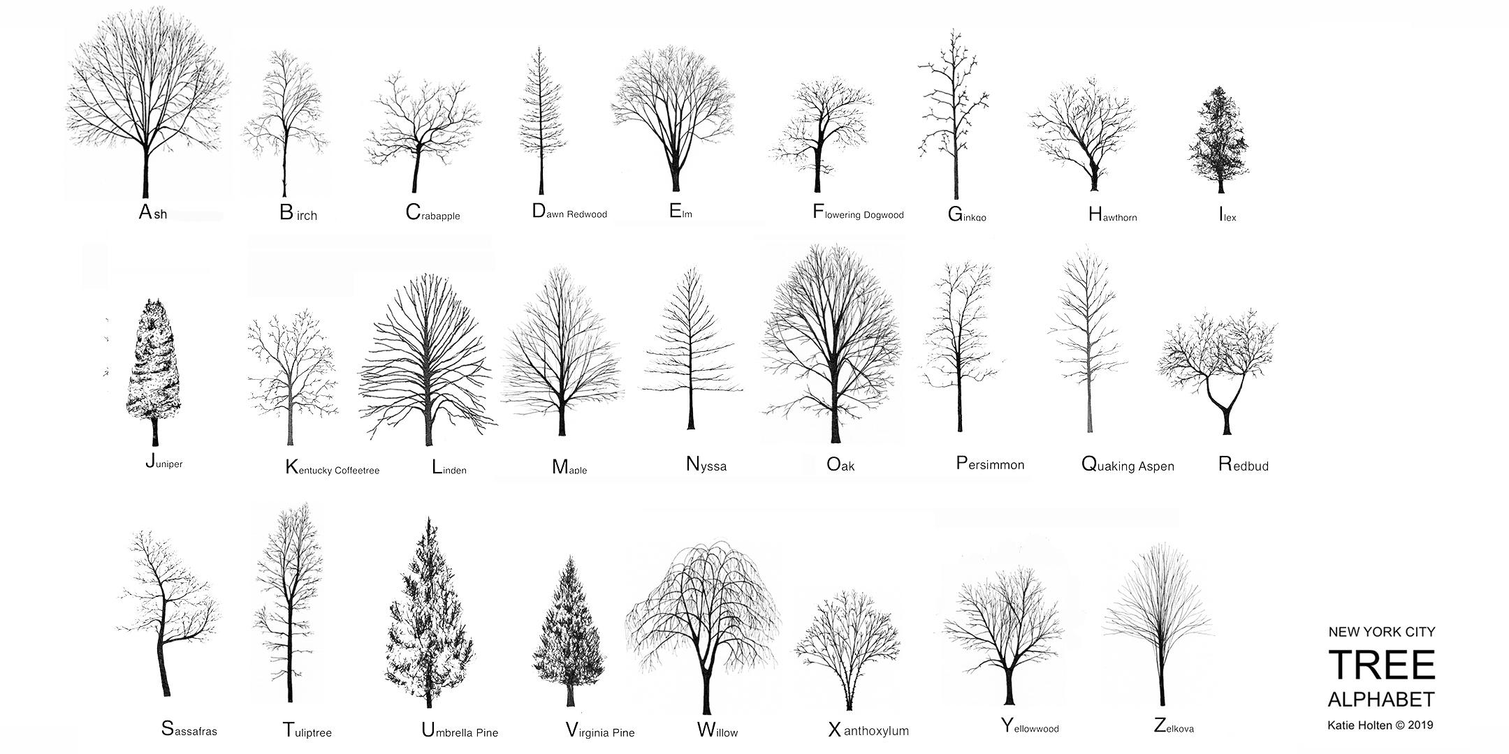 Katie Holten. New York City Tree Alphabet 2019. wide.jpg