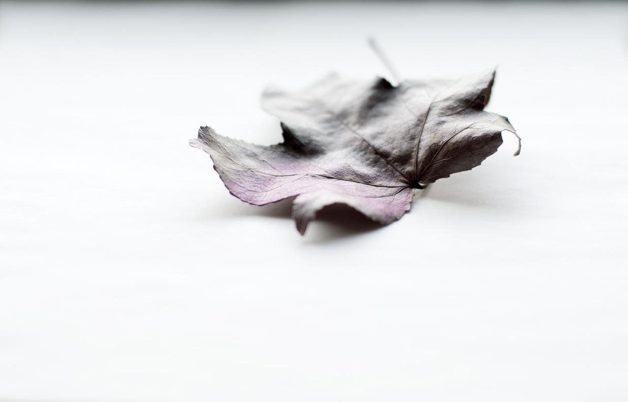 purple_maple.jpg