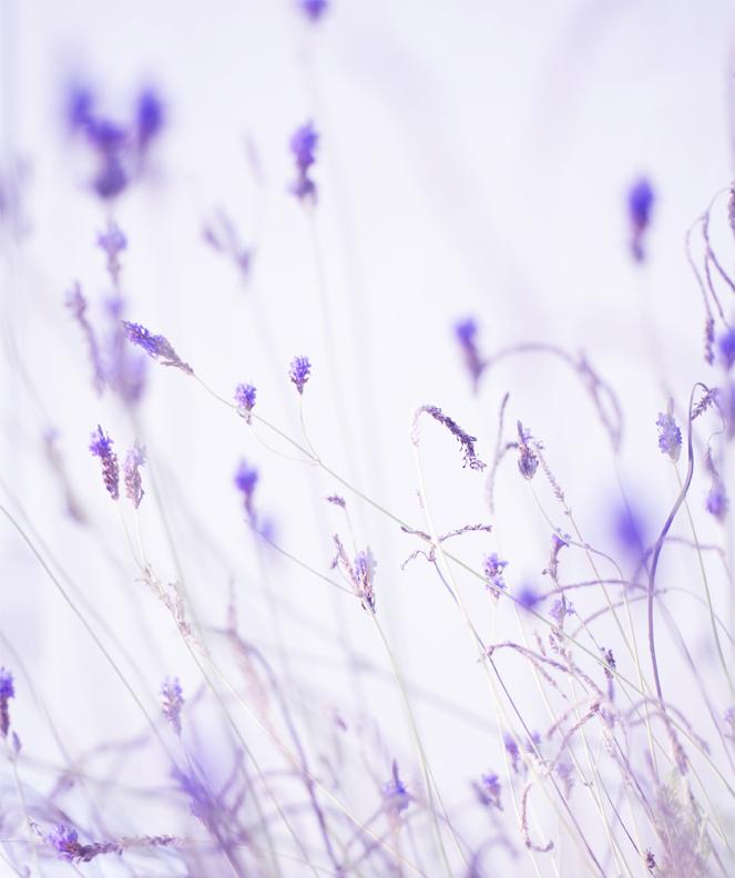 lavender_nautural.jpg