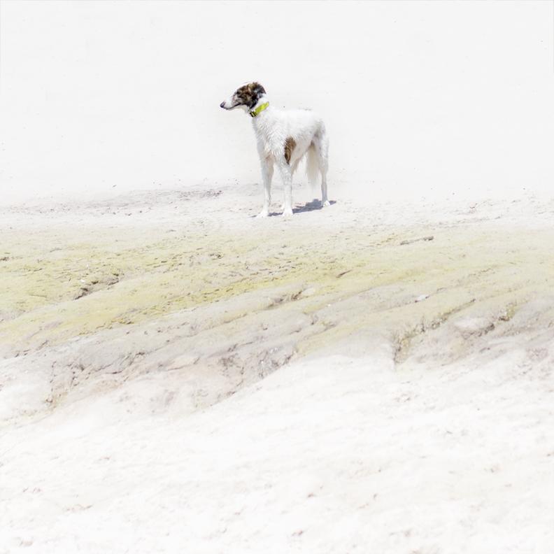 YT_greyhound.jpg