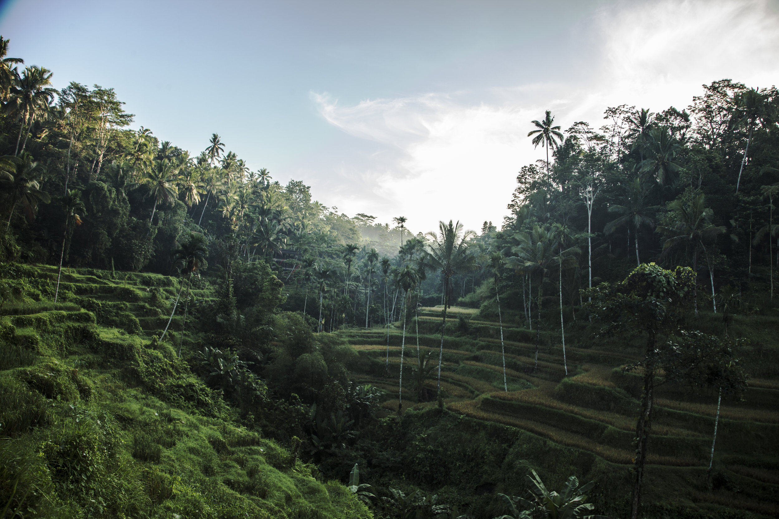 rizière Tegalalang ubud indonesie ricefield