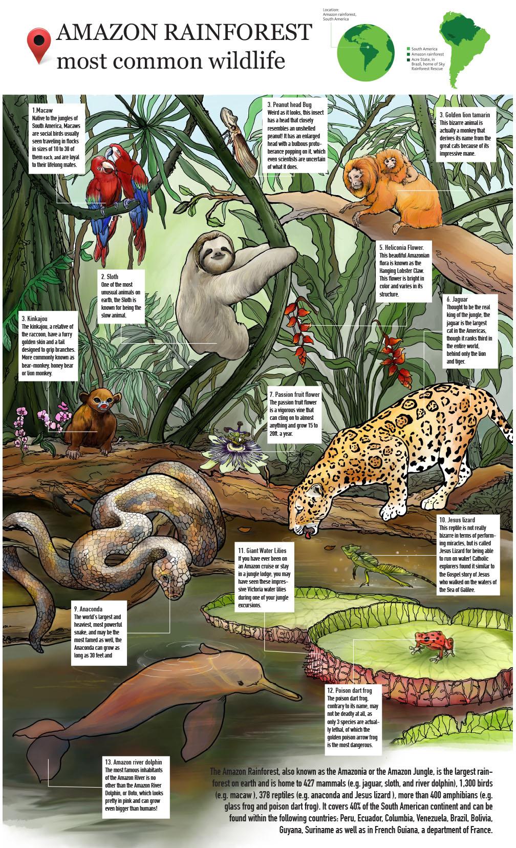 Amazon Rainforest Most Common Wildlife