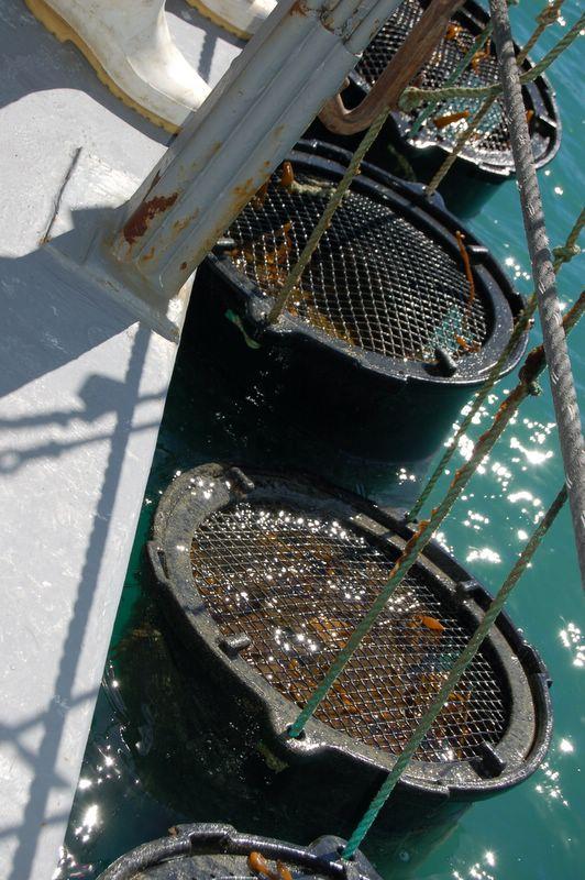 barrels on side of barge 2 (2).jpg
