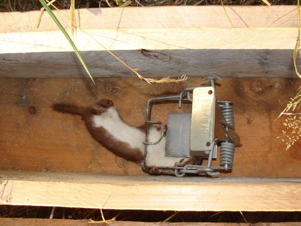 A trap at Lansdowne Valley