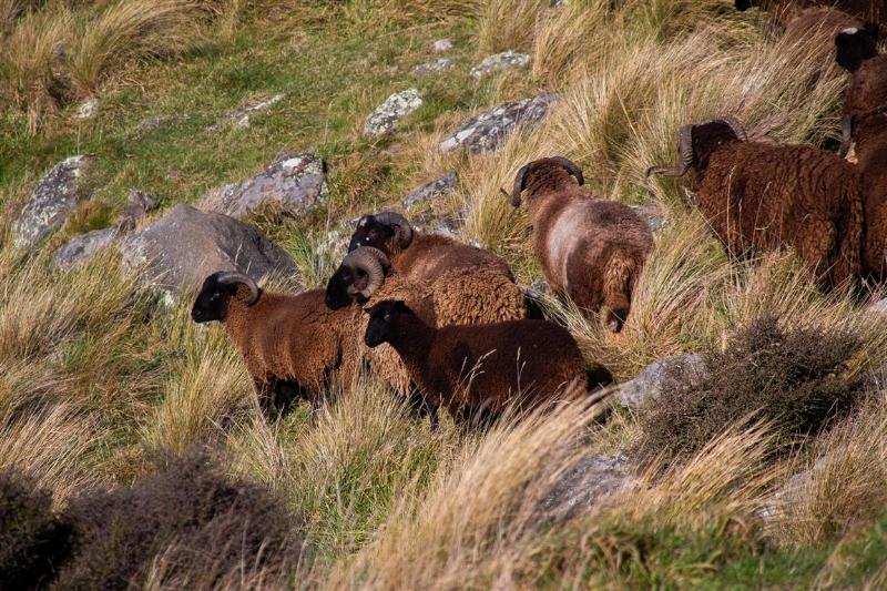 Wyld Lamb website gallery 03 .jpg