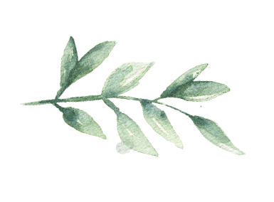 MF_Leaves_01.png