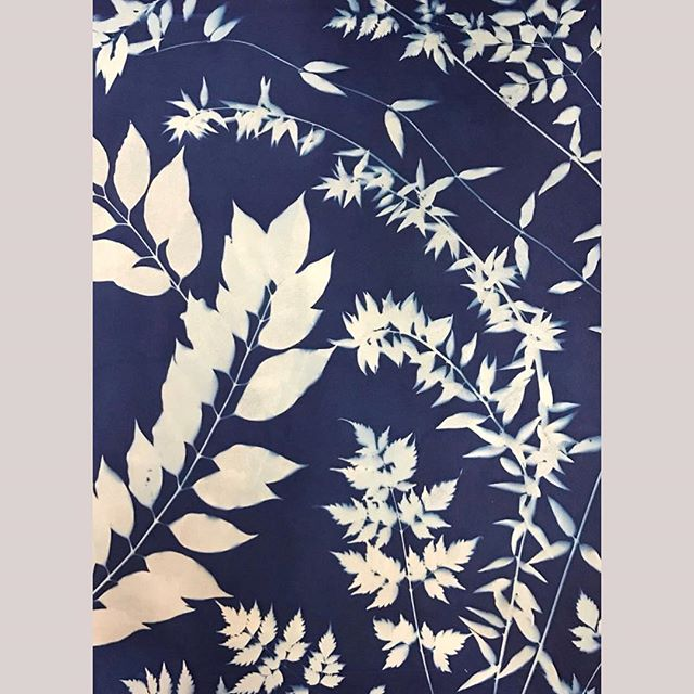 Join me this Thursday April 18th from 6-9pm @portofraleigh where I will be sharing my Cyanotype Artwork and pillows. . . . . . . . . . #ericagimsondesign #cyanotype #print #blueandwhite #art #dtraleigh #raleighdesign #botanicalart