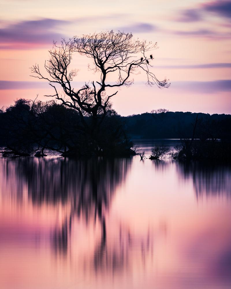Three Crow Tree