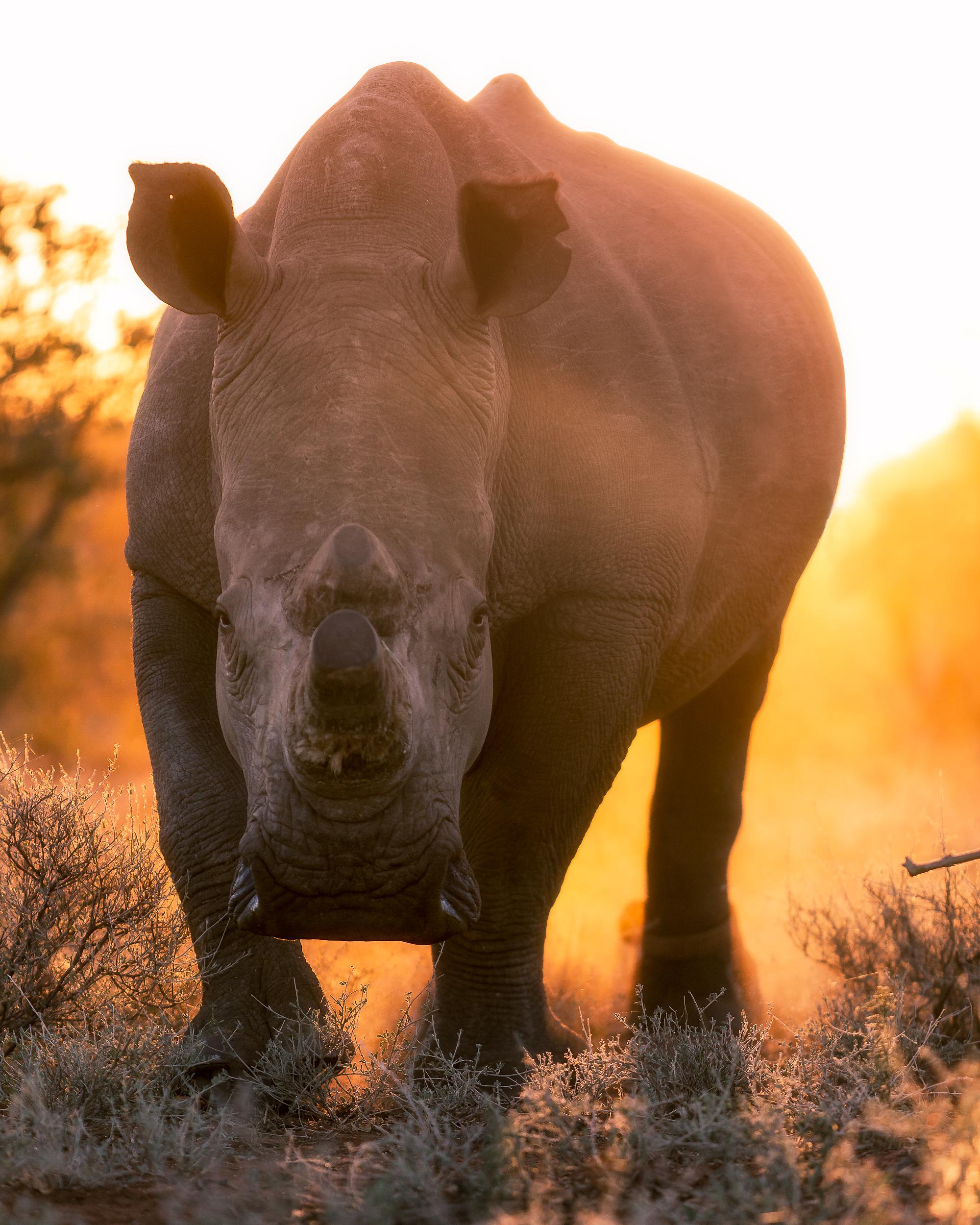 White Rhino by Mike O'Leary - Greengraf Photography-23.jpg