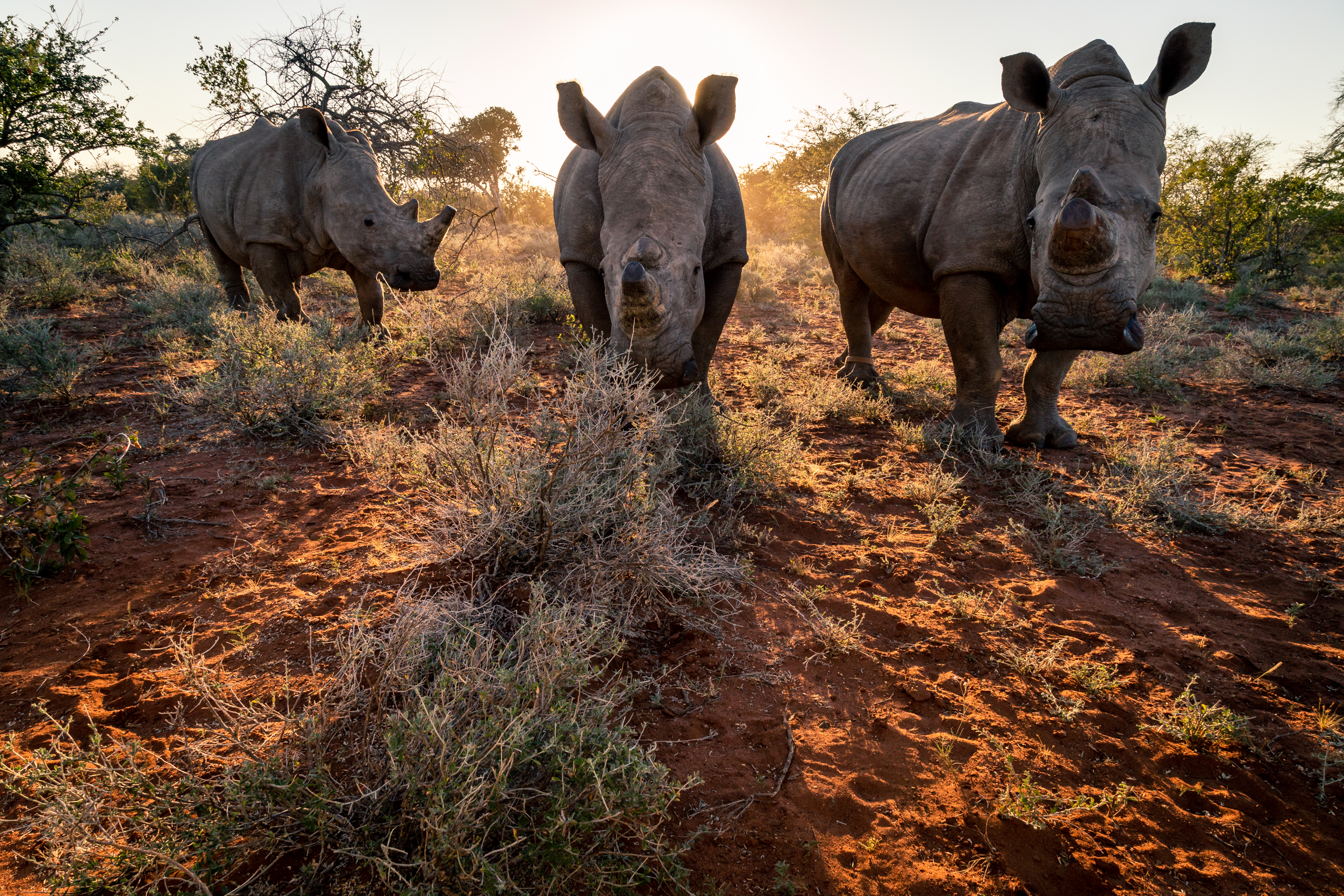 Three White Rhinos by Mike O Leary - Greengraf Photography.jpg