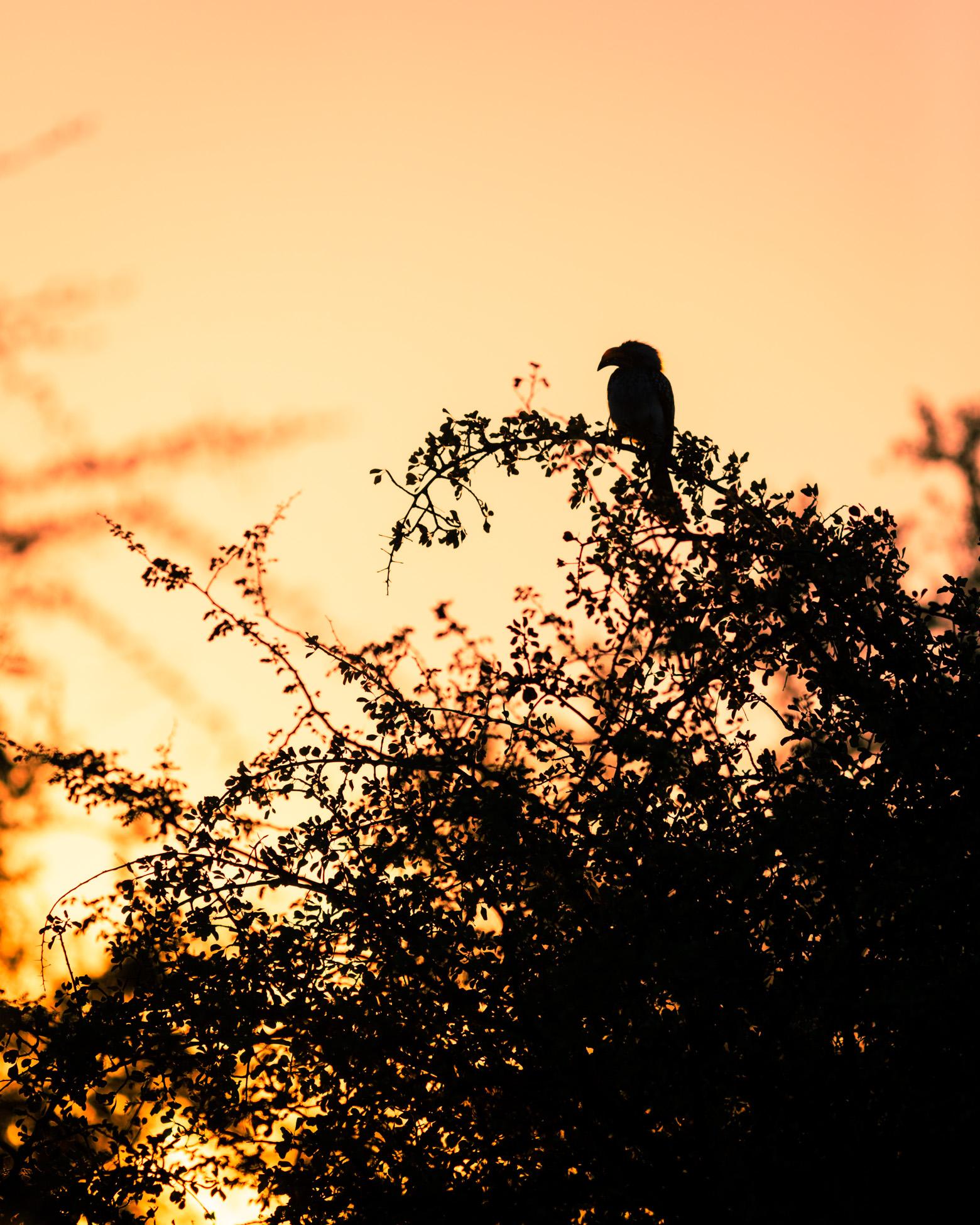 wildlife-photography-workshop-greengraf-photography.jpg