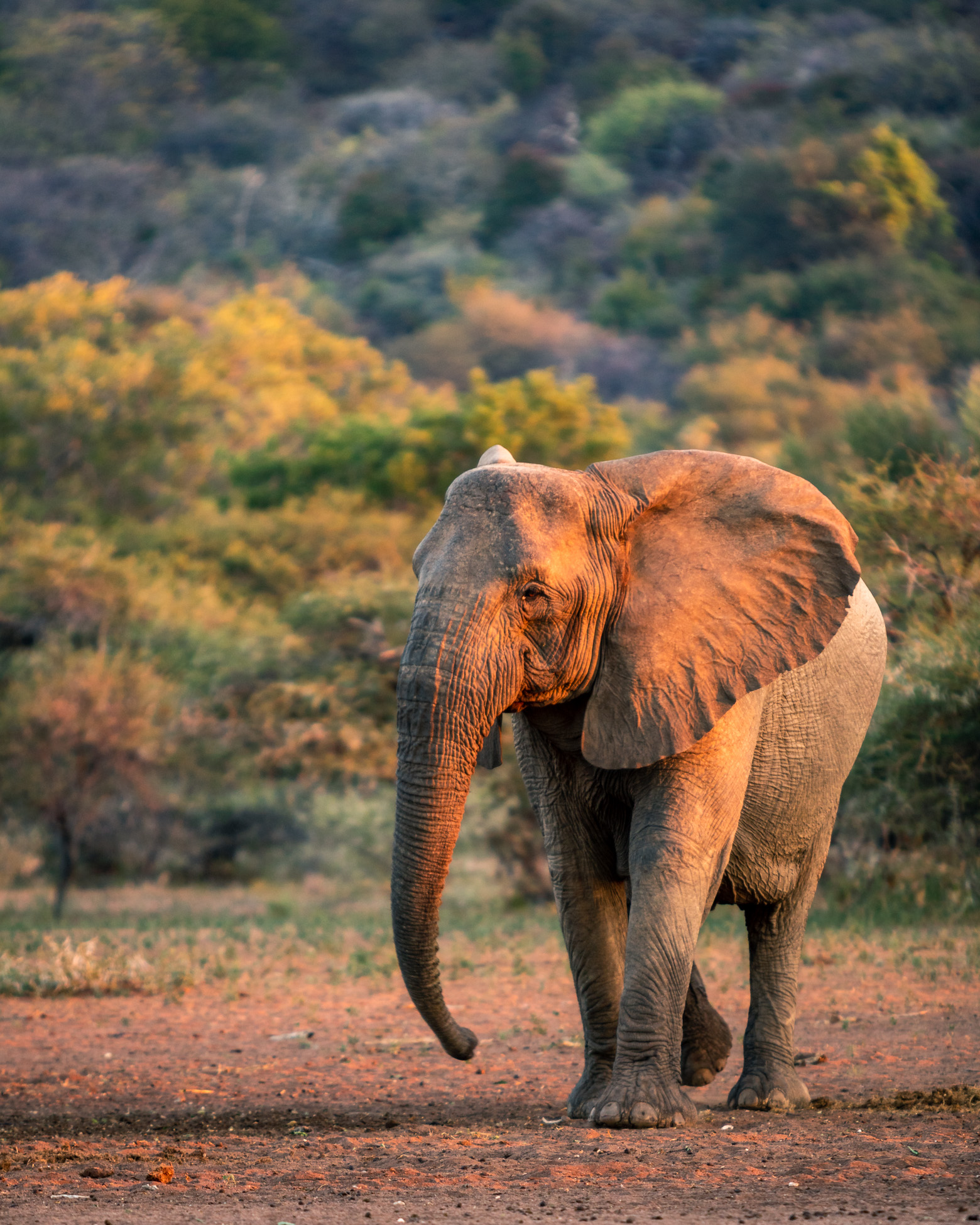 wildlife_photography_african_elephant_greengraf_photography.jpg