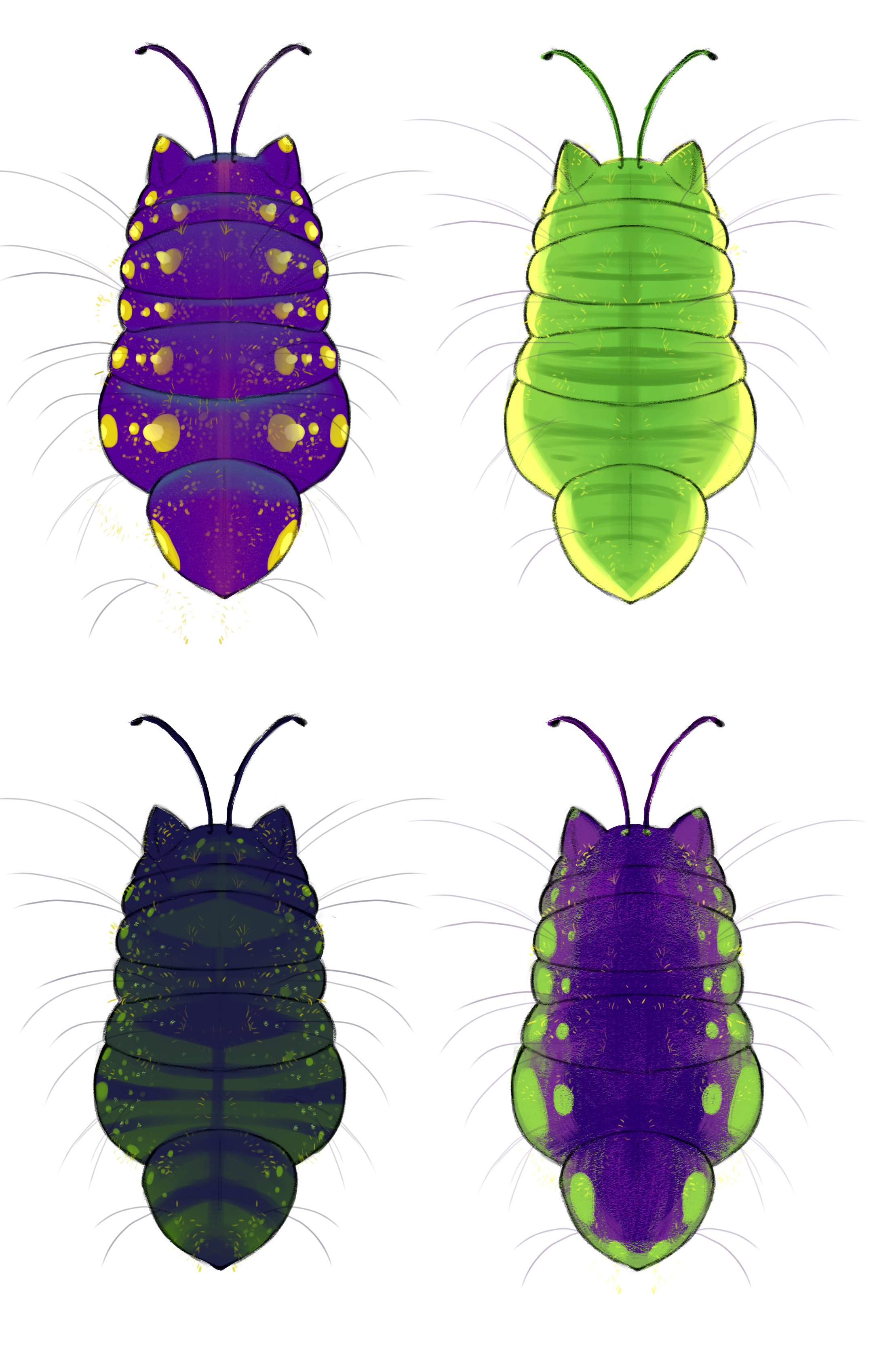 catpillar dorsal colored 2.png