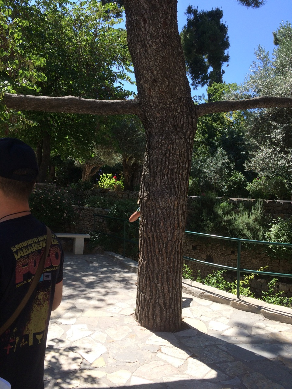 Tree in the shape of a Cross near the Garden Tomb, Jerusalem