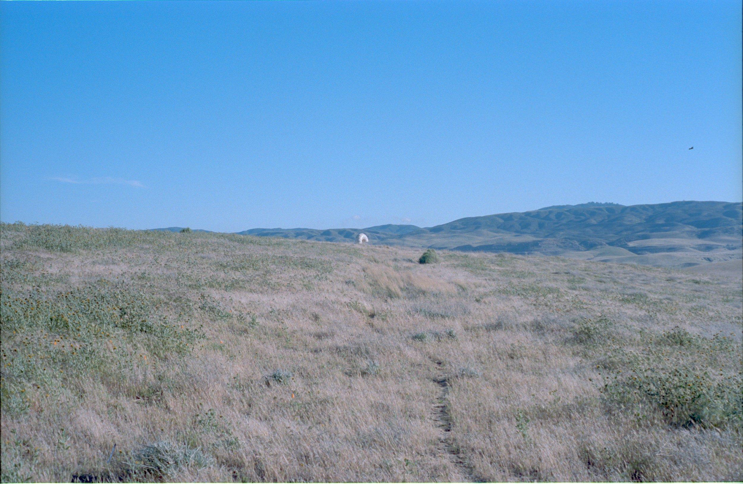antelope valley, macaroni