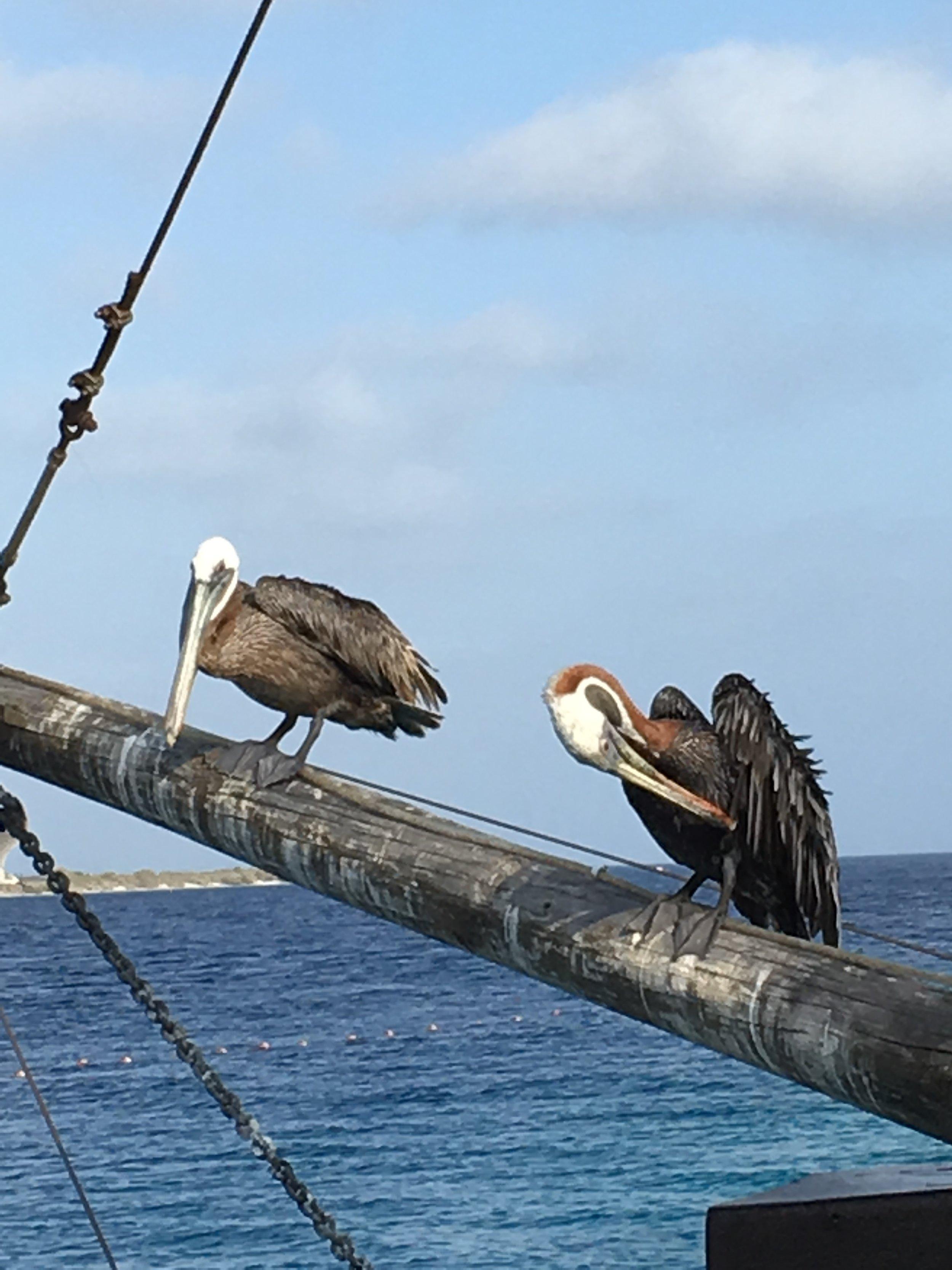 Bonaire Bird Watching