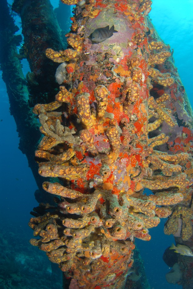 Bonaire Diving is colorful!