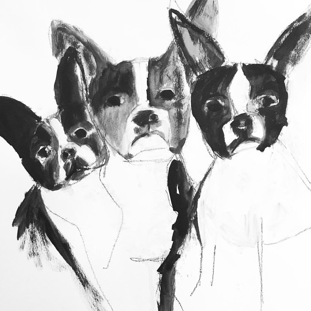 Sketch of the Boston Terriers