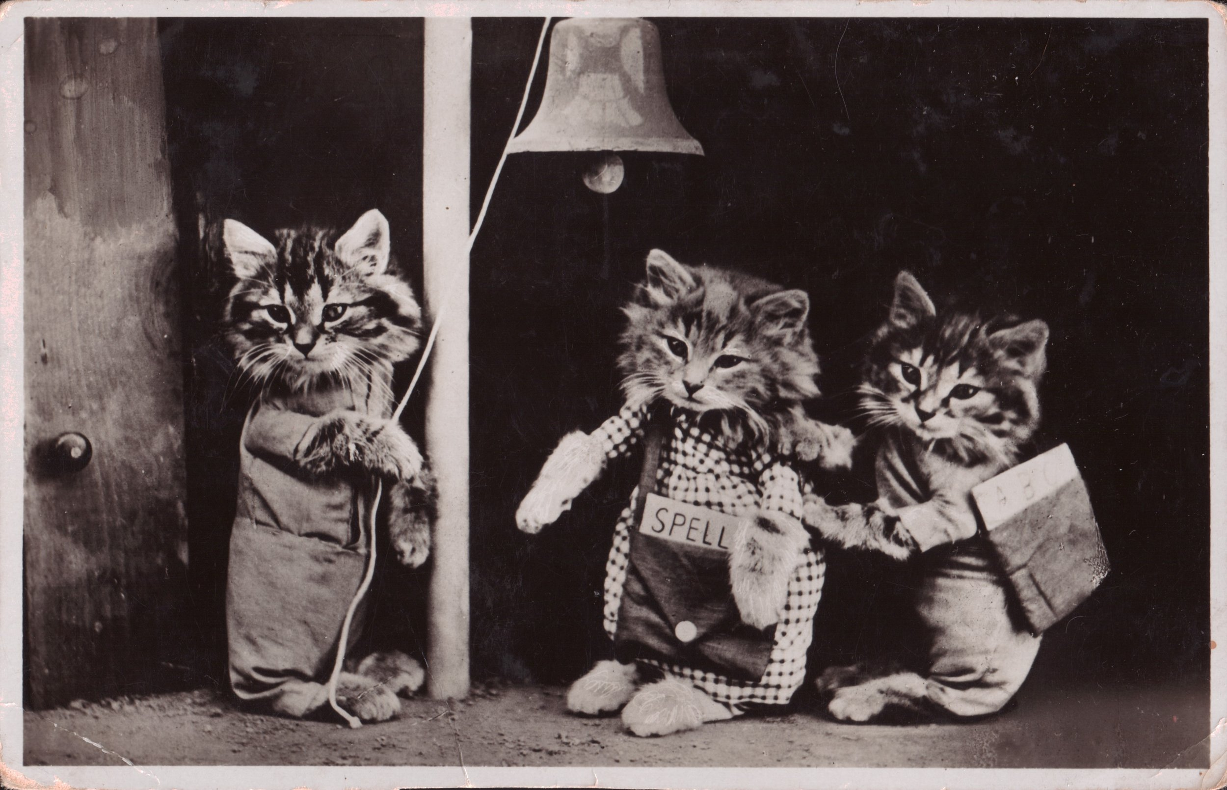 THE DRESSED CATS PROJECT