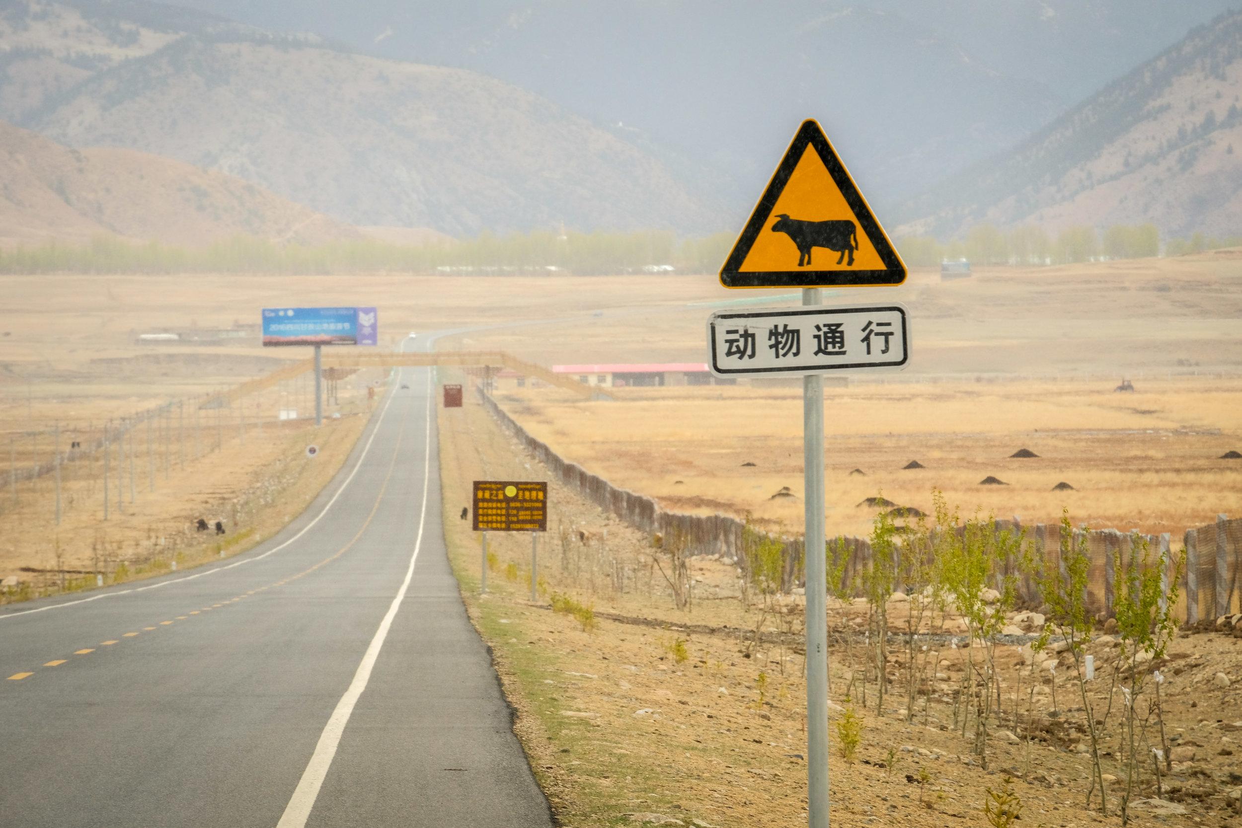 Yading-Daocheng-Litang-3274.jpg