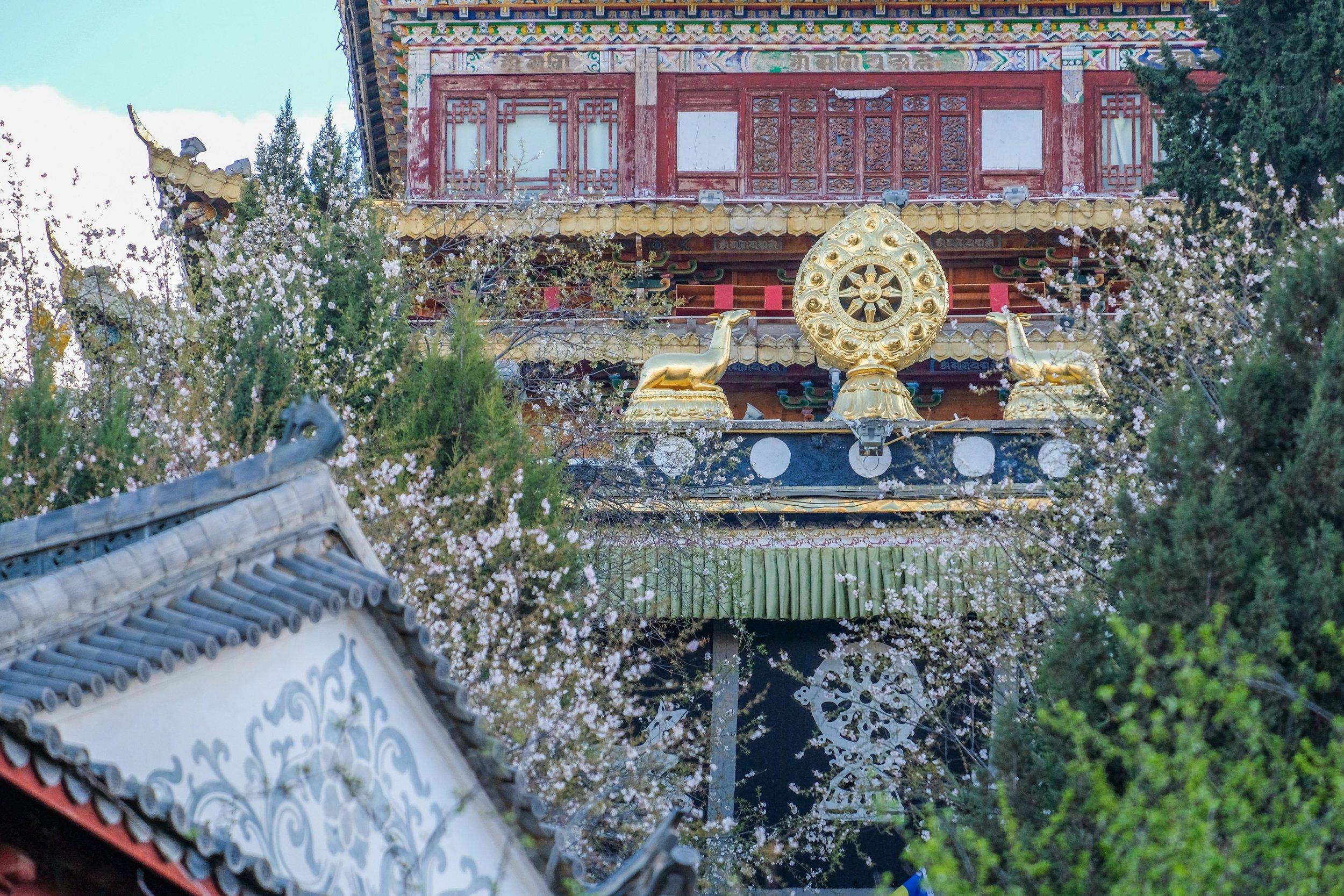 Zhongdian_lo-res-2501.jpg