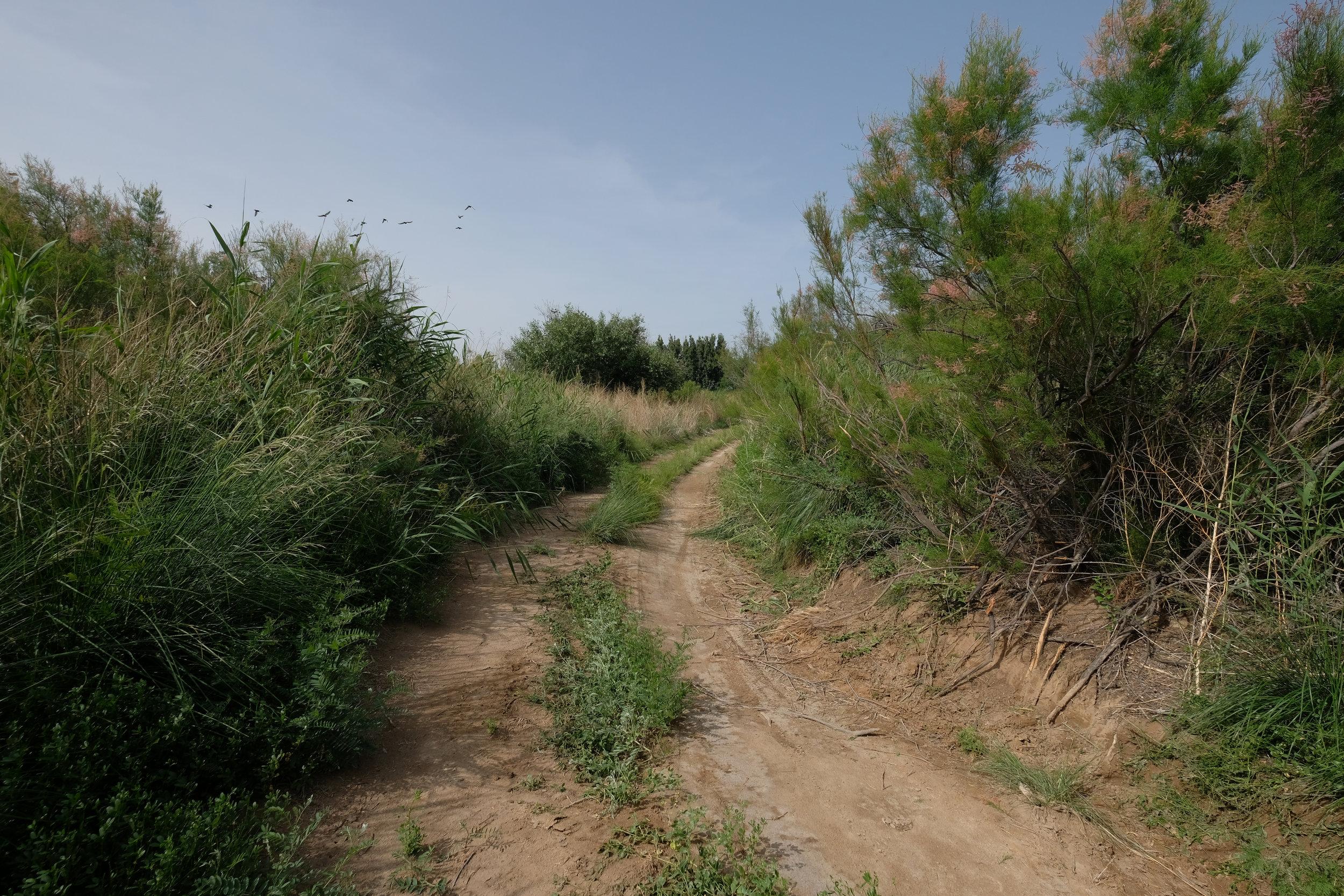 kazakh-corner-route-4670_34637836134_o.jpg