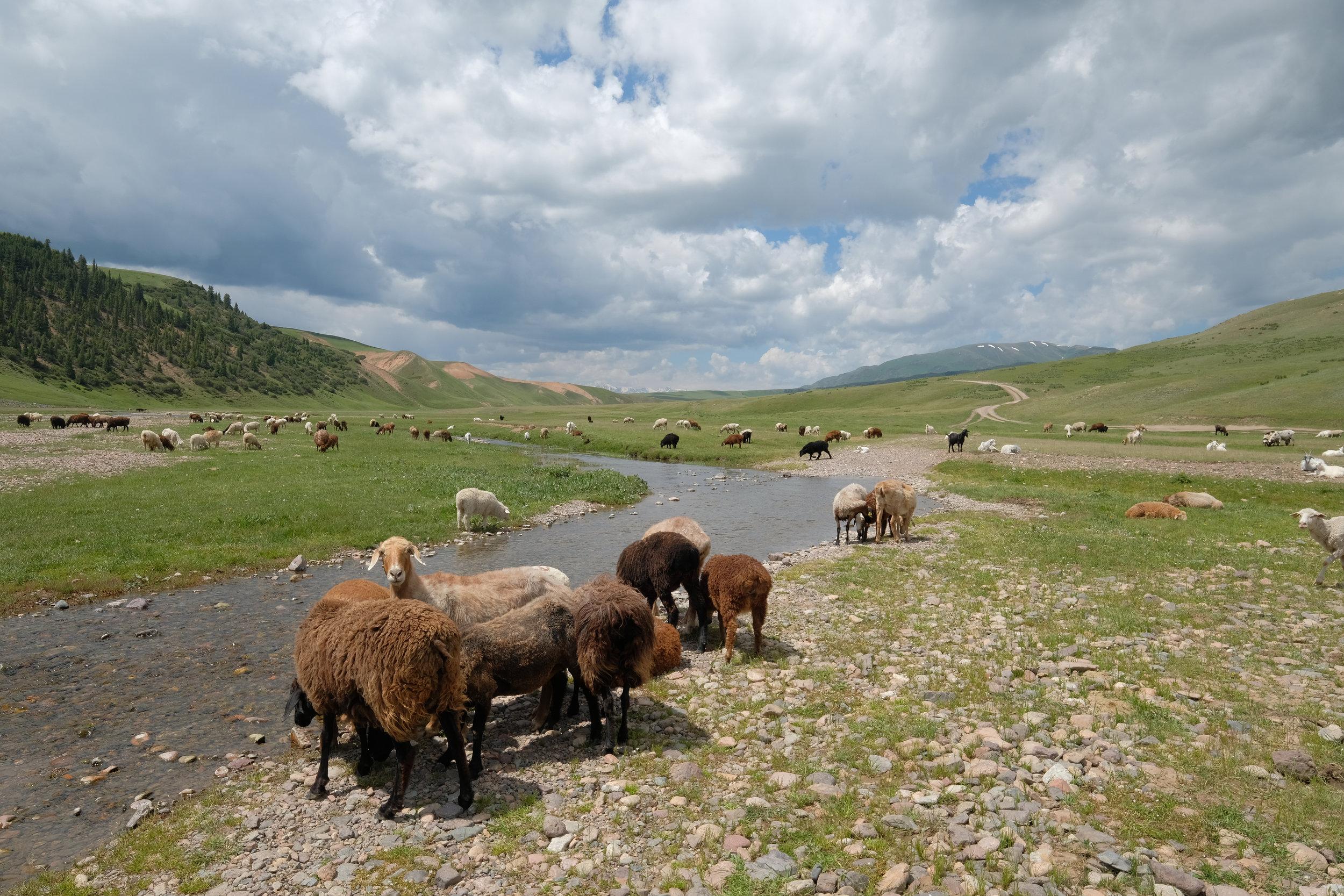 kazakh-corner-route-5207_35312240652_o.jpg