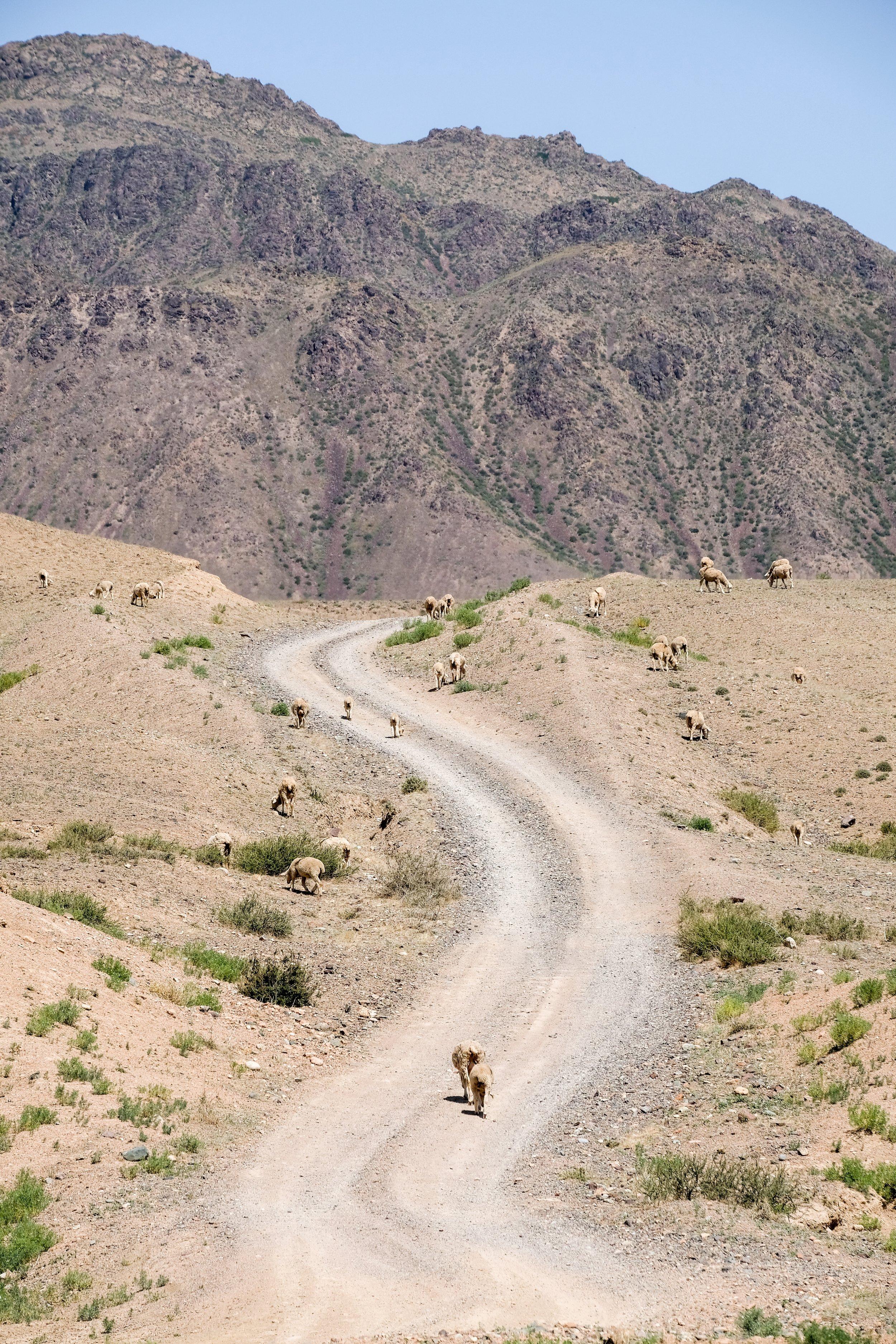 kazakh-corner-route-5082_35424407136_o.jpg
