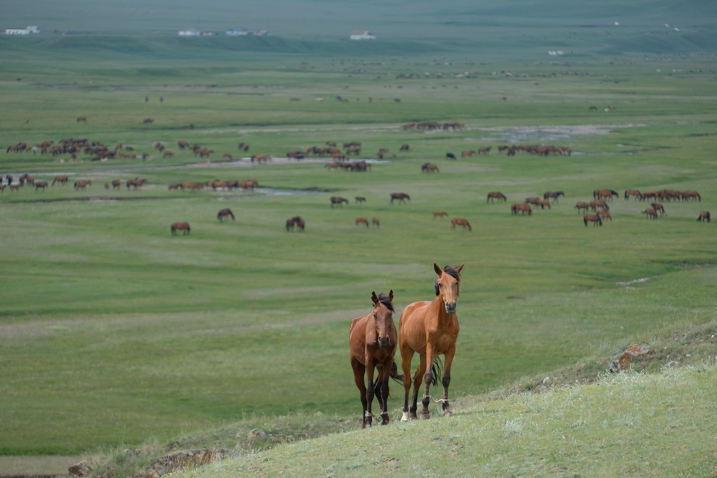 kazakh-corner-route-5232_34670791113_o.jpg
