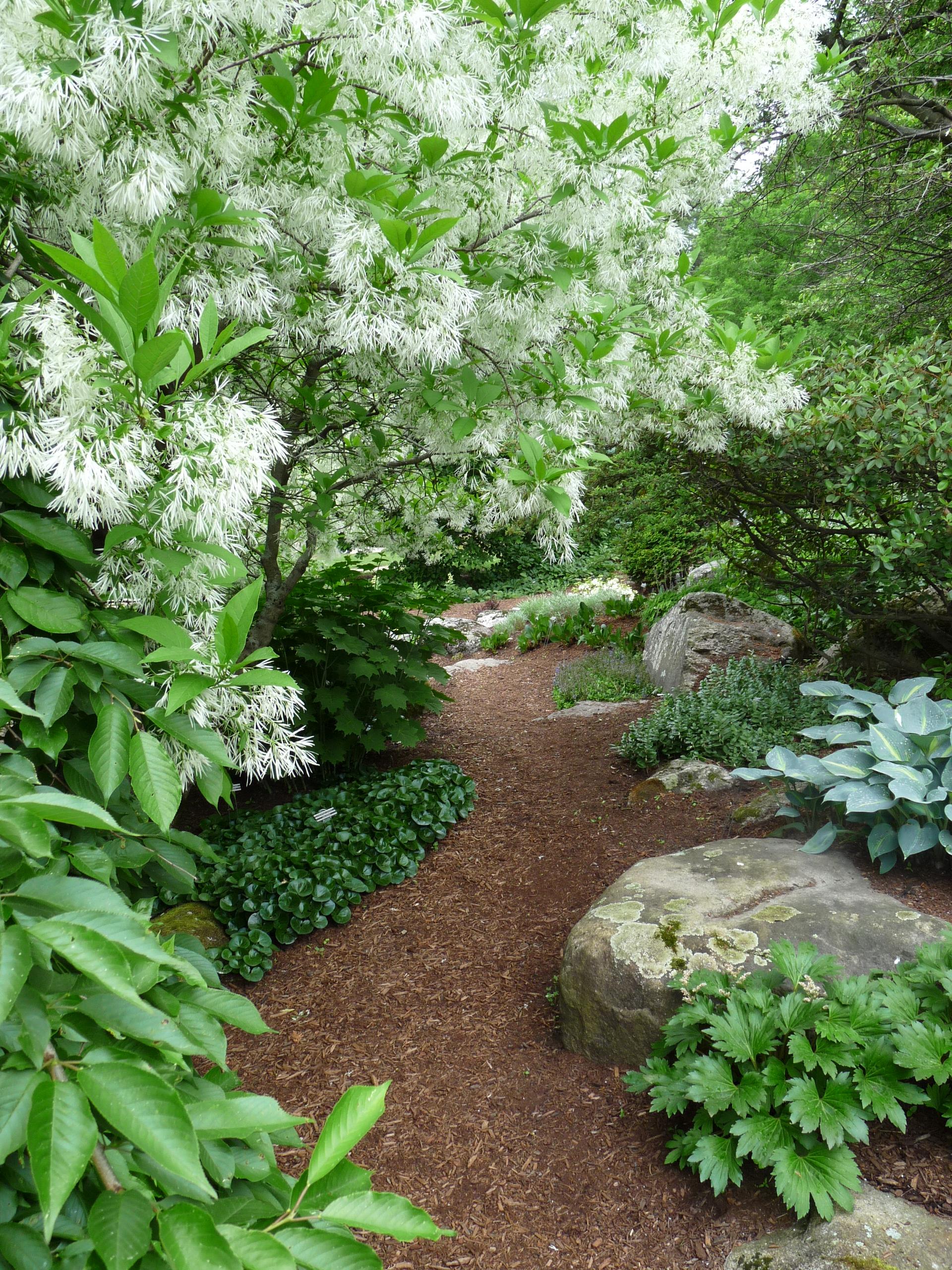 woodlands garden path.JPG