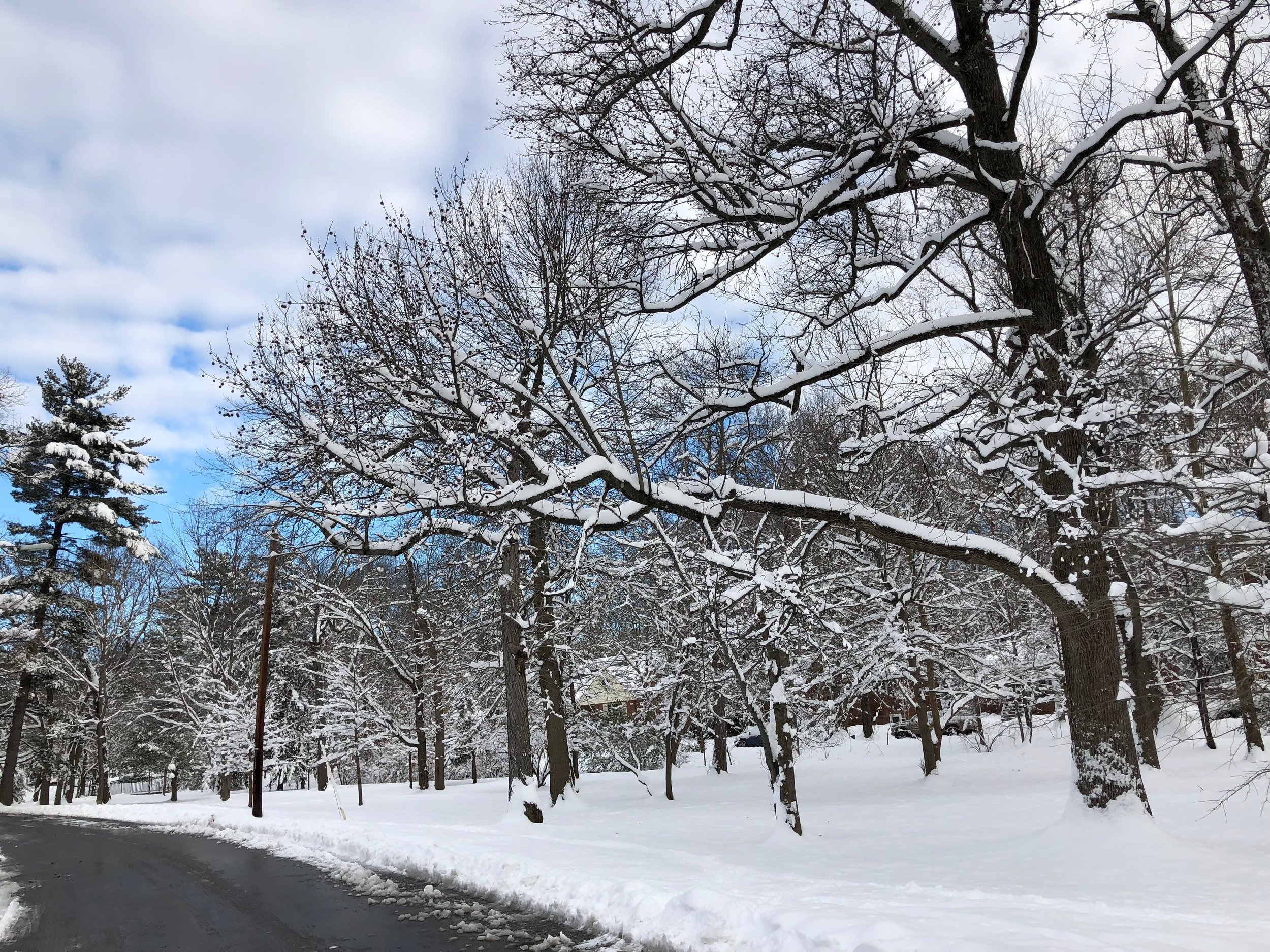 Quiet snow, January 2019