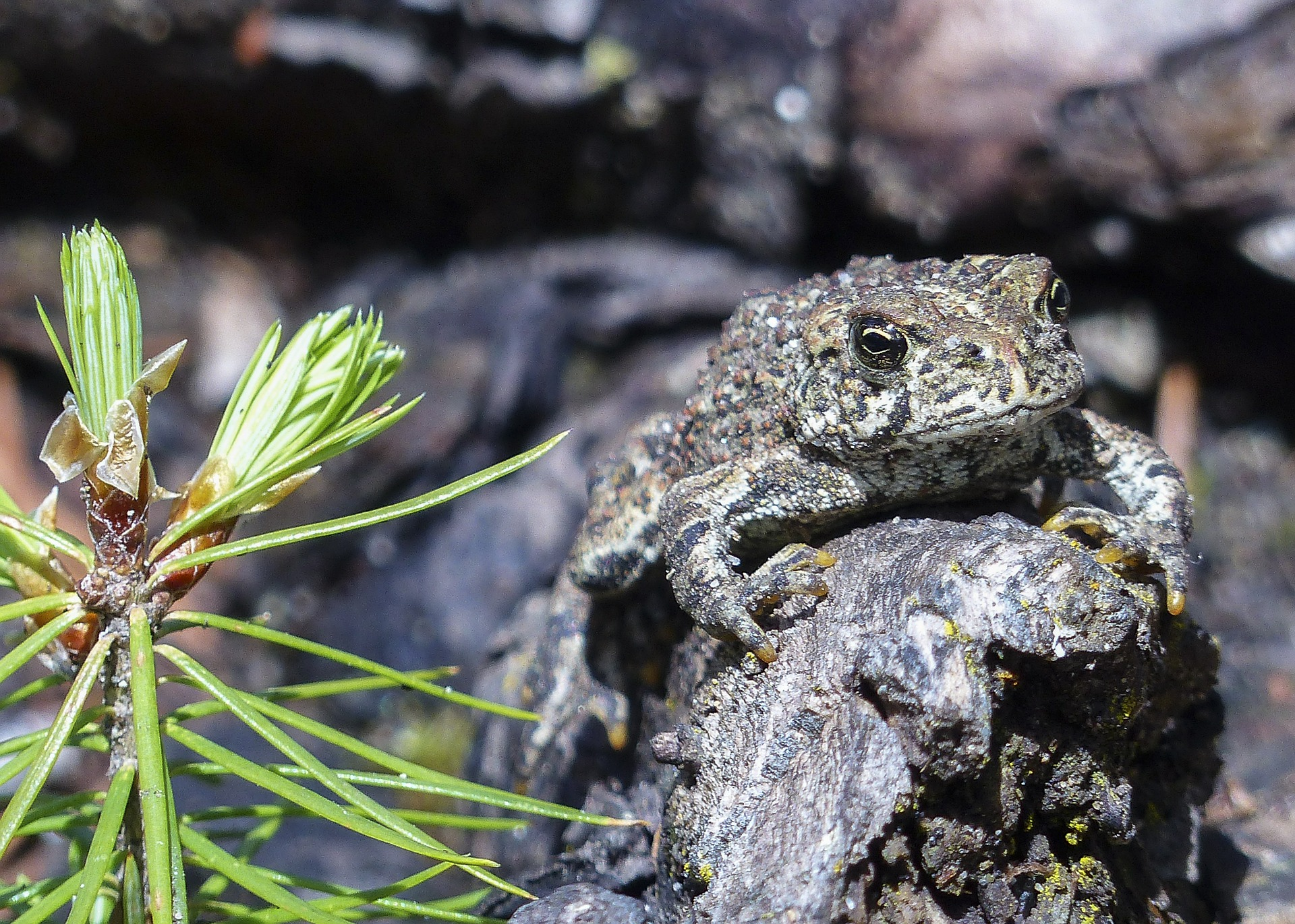 toad-547099_1920.jpg