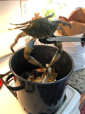 crab-in-pot.jpg