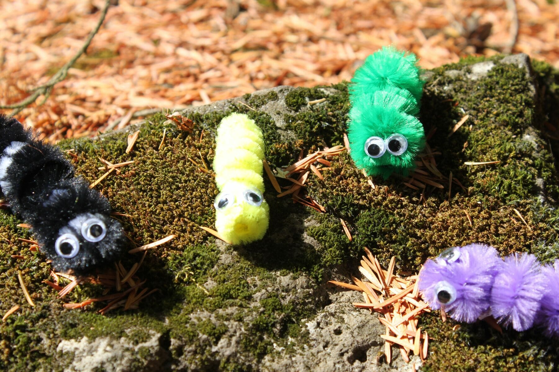 Pipe Cleaner Caterpillars (Craft from June 8 2019)