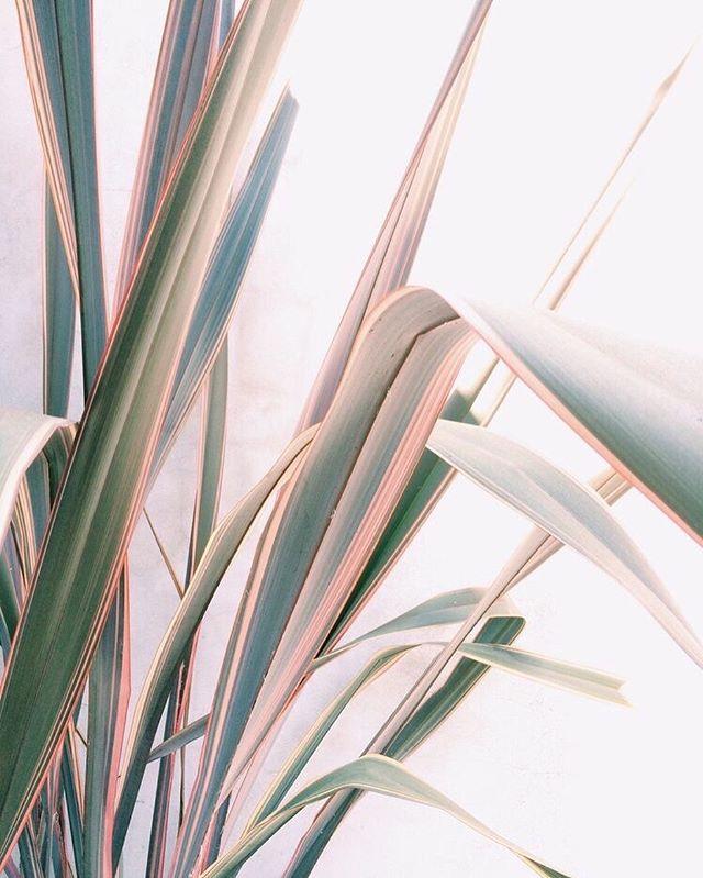 Snow Day Dreaming 🌿✨ via @wildercalifornia . . . #plantlady #plants #sustainability #beauty #plantporn  #wildercalifornia #nature #plantsofinstagram