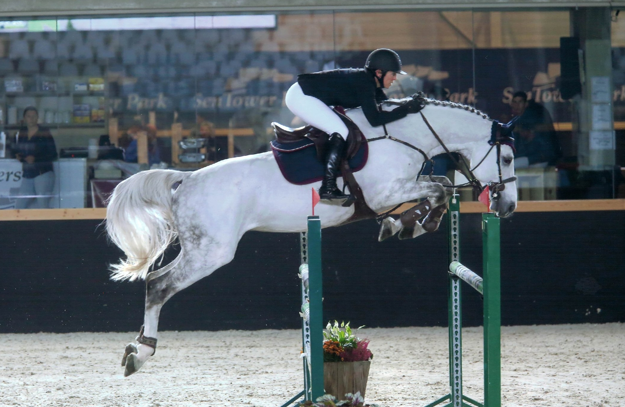 Celsius is making a name for himself in the equitation ranks on the West Coast USA