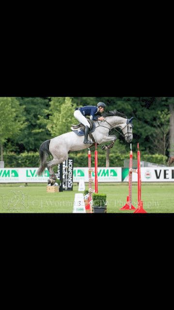 Burlington Riverland has been sold and recently very successful in the World Championships for Young Horses in Lanaken Belgium in September 2017.  Now competing successfully in the Youngster Tours with Chloe Reid (USA).