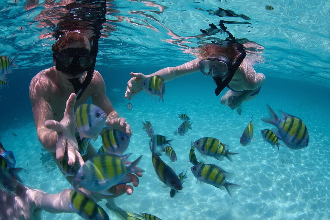 MEXICO ROCKS   Situated in calm shallow water inside the reef, Mexico Rocks is home to a wide assortment of small creatures.  Includes: water  Depart 8:30 am or 1:30 pm  Return 12:00 pm / 4:00 pm