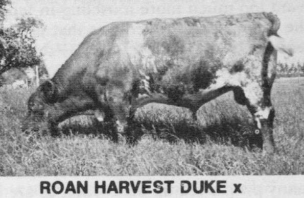 Roan Harvest Duke (1).jpg