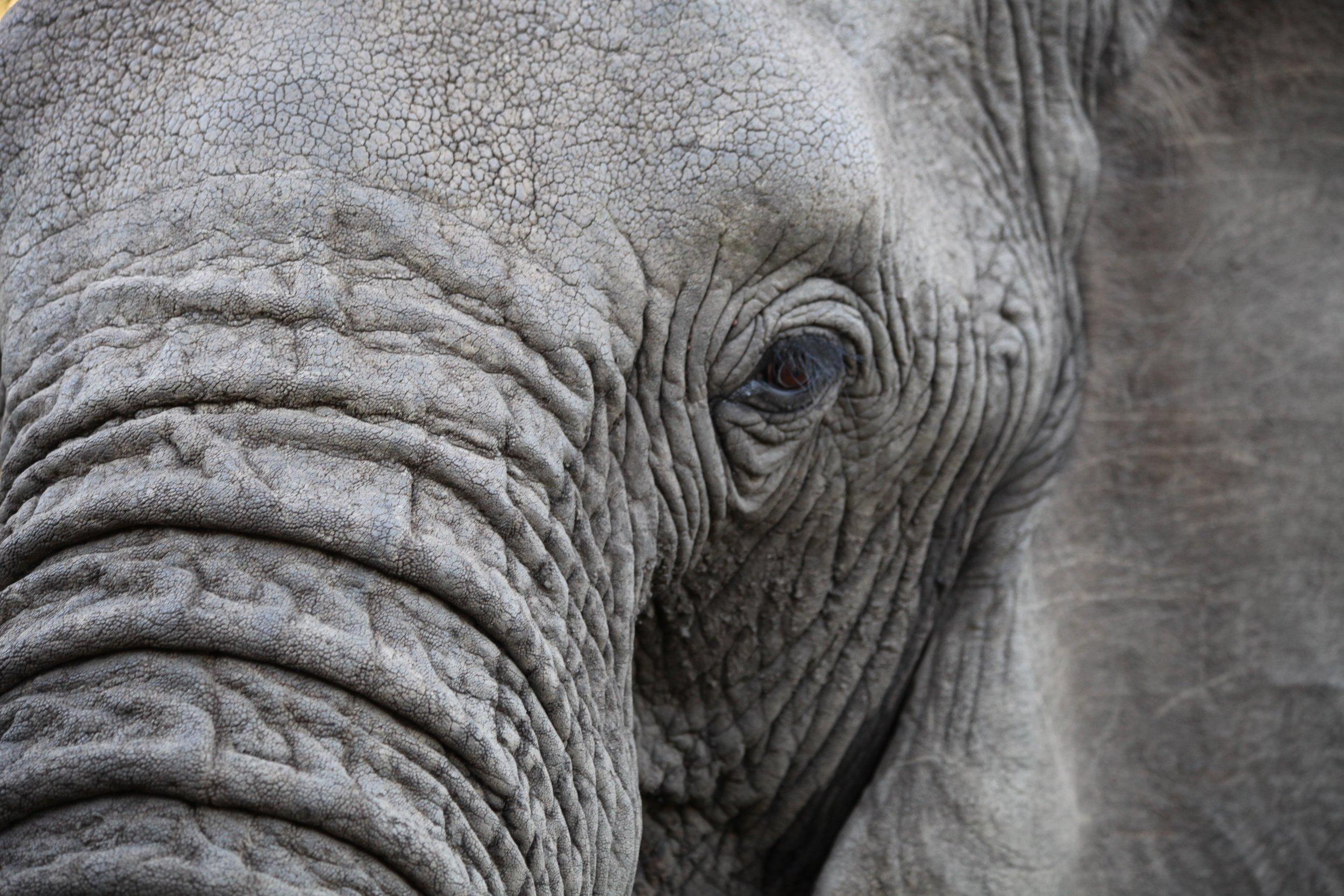 elephant_eye_CT