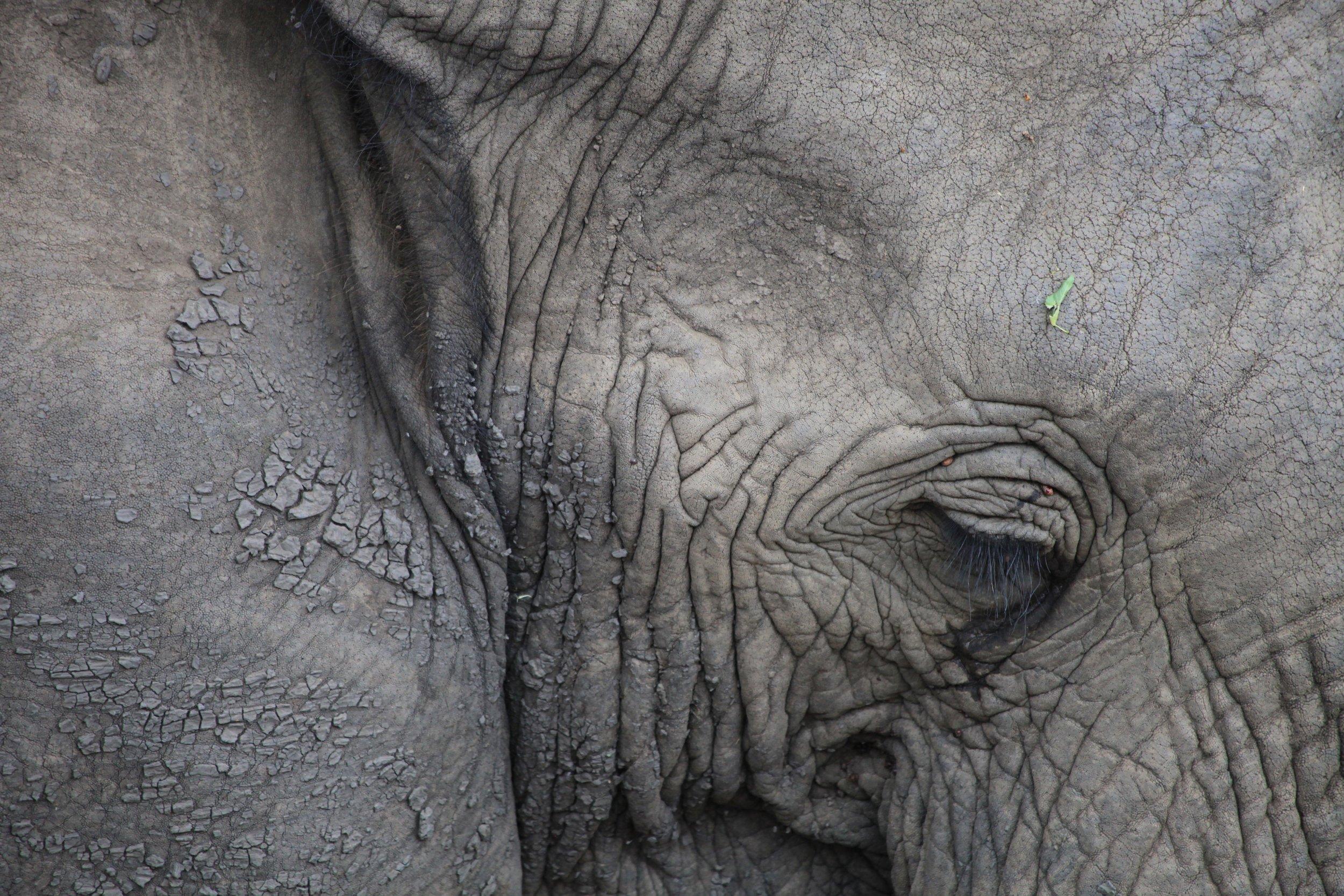 elephant_peace.jpg
