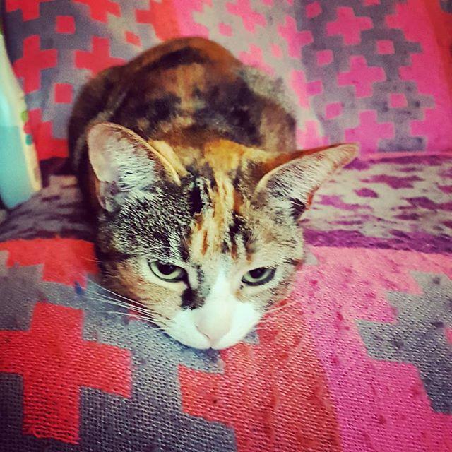 Mavis. Our Great Leader. 😸👊 . . . #catsofinstagram #cats #lovecats #greatleader #catlove #pets #petsofinstagram #petstagram