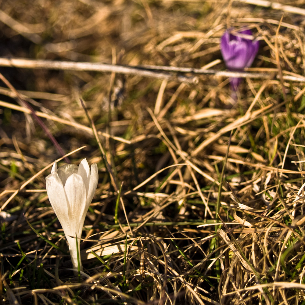 Flower-Start.jpg