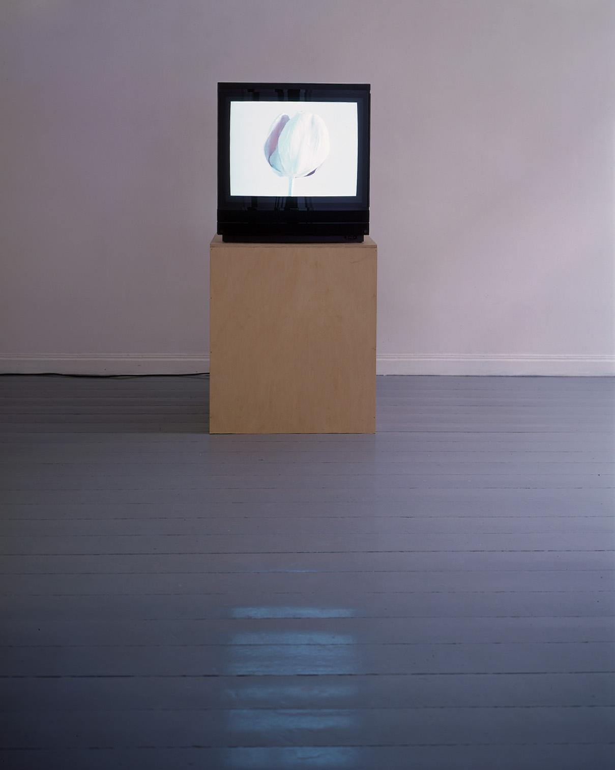 A K Dolven, still life, installation Galleri Bouhlou.jpg